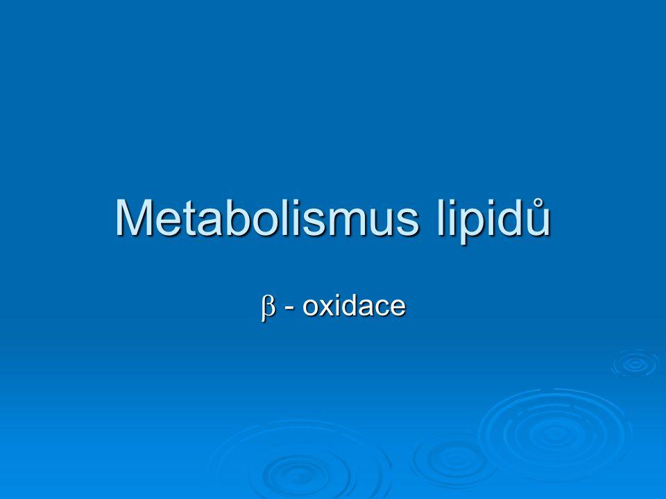 Metabolismus glycerolu