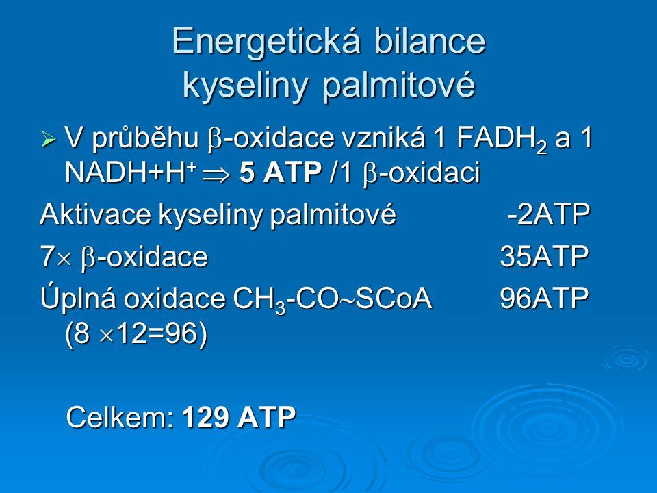 Energetická bilance kyseliny palmitové  V průběhu  -oxidace vzniká 1 FADH 2 a 1 NADH+H +  5 ATP /1  -oxidaci Aktivace kyseliny palmitové -2ATP 7 