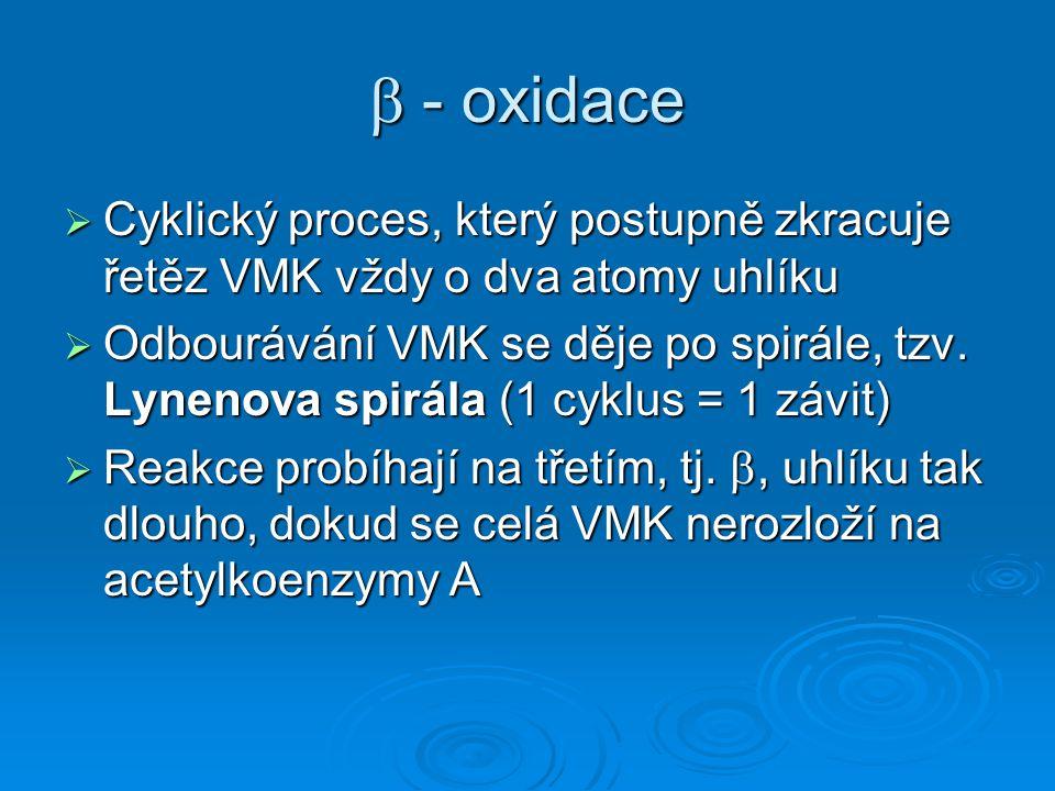  - oxidace  Cyklický proces, který postupně zkracuje řetěz VMK vždy o dva atomy uhlíku  Odbourávání VMK se děje po spirále, tzv. Lynenova spirála (