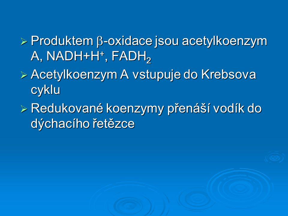 Produktem  -oxidace jsou acetylkoenzym A, NADH+H +, FADH 2  Acetylkoenzym A vstupuje do Krebsova cyklu  Redukované koenzymy přenáší vodík do dých