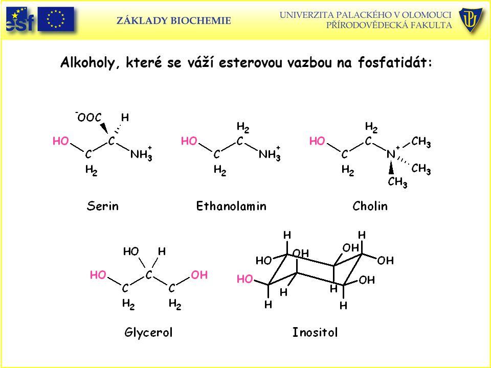 Alkoholy, které se váží esterovou vazbou na fosfatidát: