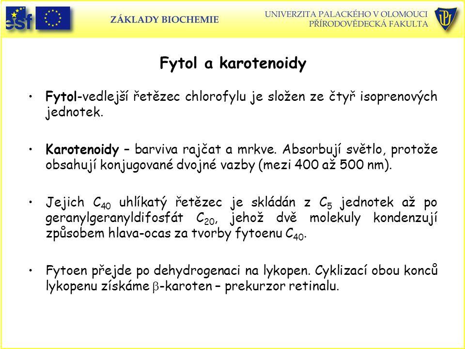 Fytol a karotenoidy Fytol-vedlejší řetězec chlorofylu je složen ze čtyř isoprenových jednotek. Karotenoidy – barviva rajčat a mrkve. Absorbují světlo,