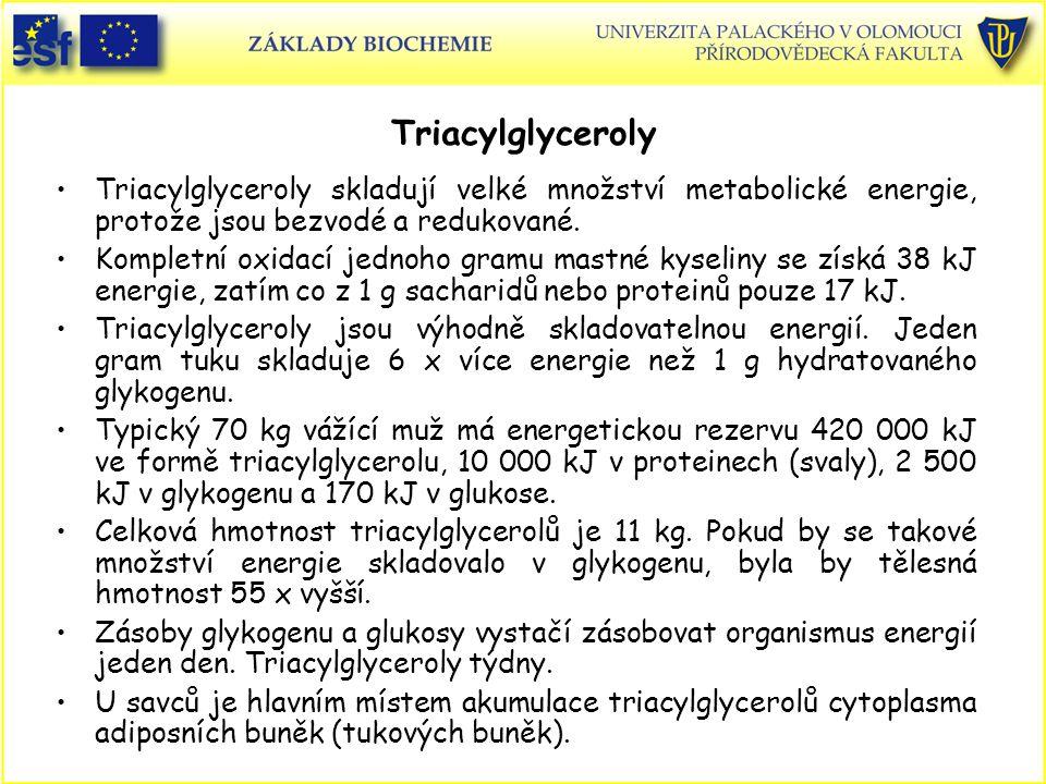 Triacylglyceroly Triacylglyceroly skladují velké množství metabolické energie, protože jsou bezvodé a redukované. Kompletní oxidací jednoho gramu mast