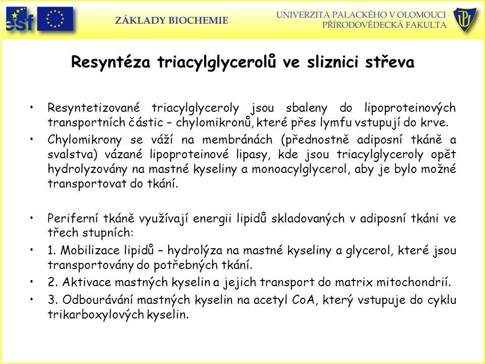 Resyntéza triacylglycerolů ve sliznici střeva Resyntetizované triacylglyceroly jsou sbaleny do lipoproteinových transportních částic – chylomikronů, k