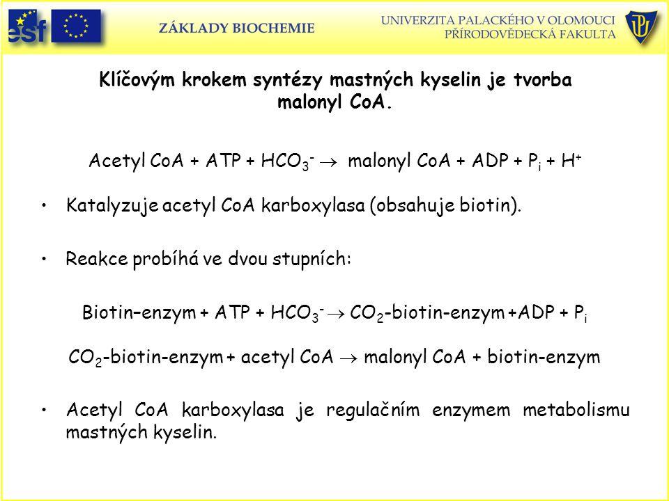 Klíčovým krokem syntézy mastných kyselin je tvorba malonyl CoA. Acetyl CoA + ATP + HCO 3 -  malonyl CoA + ADP + P i + H + Katalyzuje acetyl CoA karb