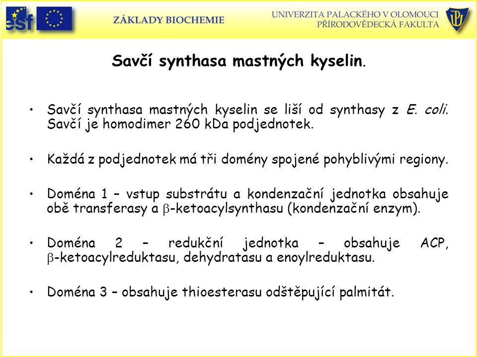 Savčí synthasa mastných kyselin. Savčí synthasa mastných kyselin se liší od synthasy z E. coli. Savčí je homodimer 260 kDa podjednotek. Každá z podjed