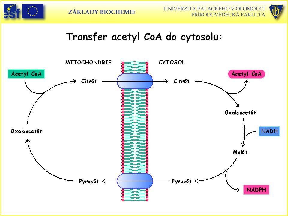 Transfer acetyl CoA do cytosolu: