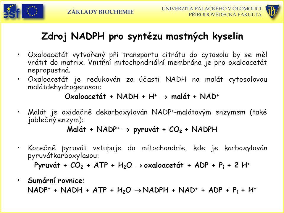 Zdroj NADPH pro syntézu mastných kyselin Oxaloacetát vytvořený při transportu citrátu do cytosolu by se měl vrátit do matrix. Vnitřní mitochondriální