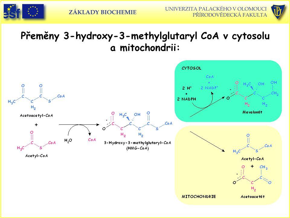 Přeměny 3-hydroxy-3-methylglutaryl CoA v cytosolu a mitochondrii: