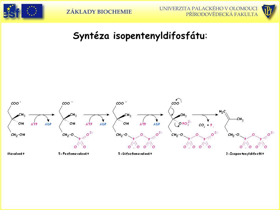 Syntéza isopentenyldifosfátu: