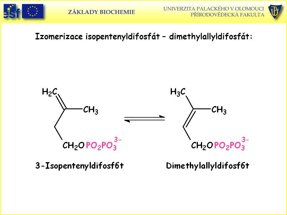 Izomerizace isopentenyldifosfát – dimethylallyldifosfát: