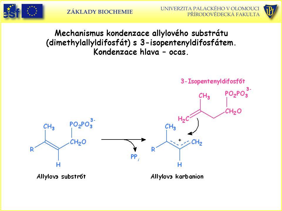 Mechanismus kondenzace allylového substrátu (dimethylallyldifosfát) s 3-isopentenyldifosfátem. Kondenzace hlava – ocas.