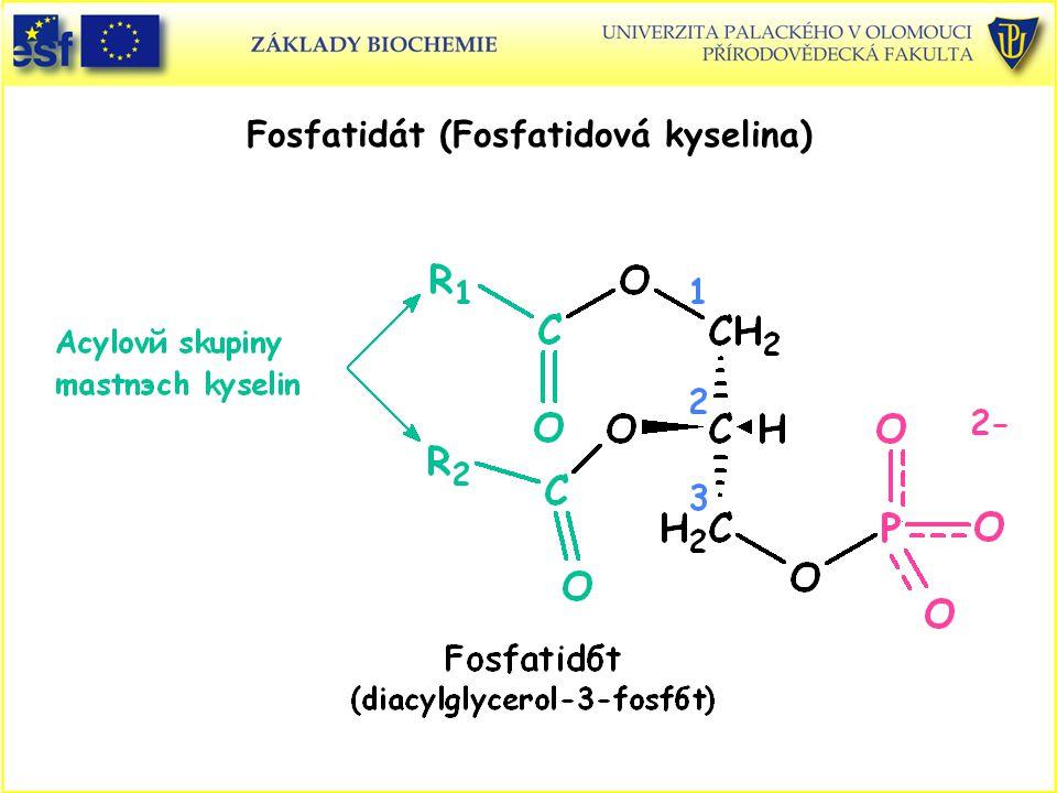 Prodlužování řetězce a tvorba nenasycených mastných kyselin probíhá na cytosolární straně membrány endoplasmatického retikula.