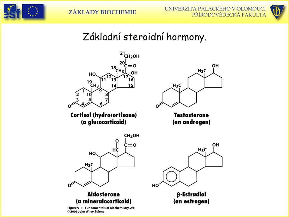 Základní steroidní hormony.