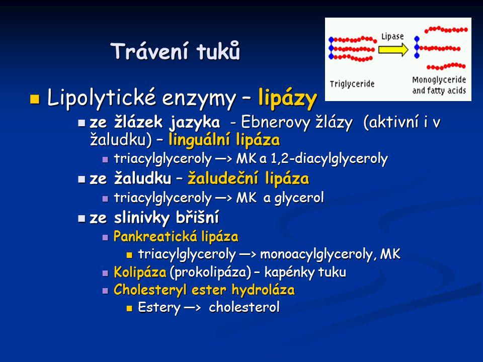 Trávení tuků Lipolytické enzymy – lipázy Lipolytické enzymy – lipázy ze žlázek jazyka - Ebnerovy žlázy (aktivní i v žaludku) – linguální lipáza ze žlá