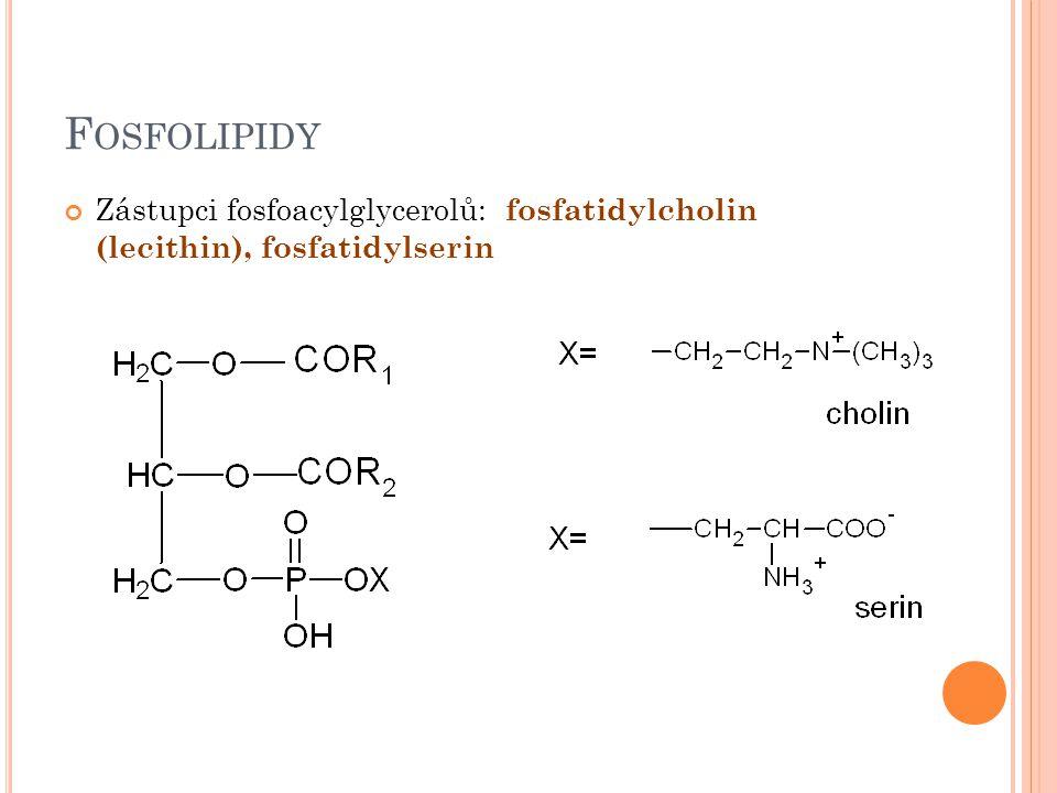 F OSFOLIPIDY Zástupci fosfoacylglycerolů: fosfatidylcholin (lecithin), fosfatidylserin