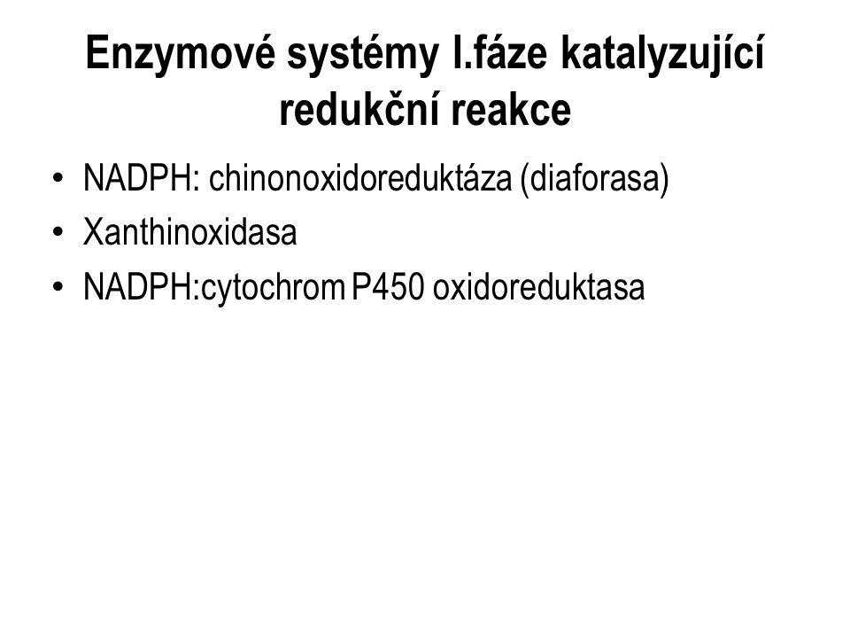 NADPH: chinonoxidoreduktáza (diaforasa) Xanthinoxidasa NADPH:cytochrom P450 oxidoreduktasa