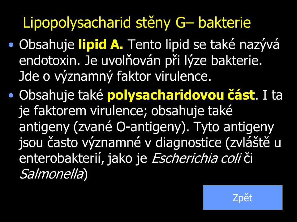 Lipopolysacharid stěny G– bakterie Obsahuje lipid A. Tento lipid se také nazývá endotoxin. Je uvolňován při lýze bakterie. Jde o významný faktor virul