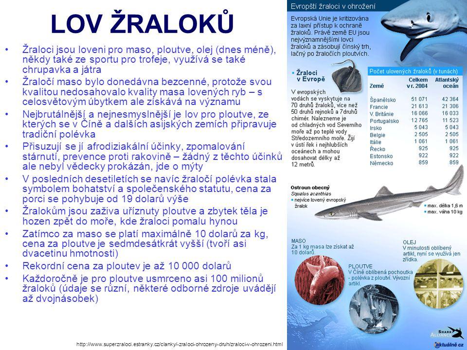 LOV ŽRALOKŮ Žraloci jsou loveni pro maso, ploutve, olej (dnes méně), někdy také ze sportu pro trofeje, využívá se také chrupavka a játra Žraločí maso