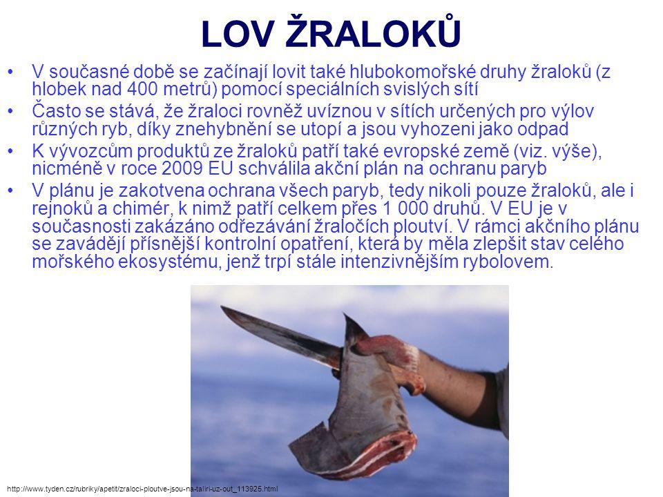 LOV ŽRALOKŮ V současné době se začínají lovit také hlubokomořské druhy žraloků (z hlobek nad 400 metrů) pomocí speciálních svislých sítí Často se stáv