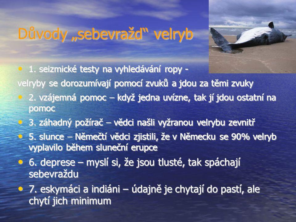 """Důvody """"sebevražd velryb 1. seizmické testy na vyhledávání ropy - 1."""
