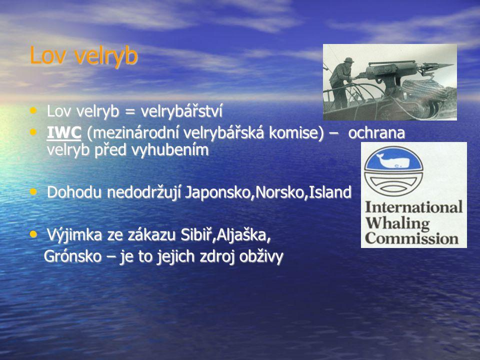 Lov velryb Lov velryb = velrybářství Lov velryb = velrybářství IWC (mezinárodní velrybářská komise) – ochrana velryb před vyhubením IWC (mezinárodní velrybářská komise) – ochrana velryb před vyhubením Dohodu nedodržují Japonsko,Norsko,Island Dohodu nedodržují Japonsko,Norsko,Island Výjimka ze zákazu Sibiř,Aljaška, Výjimka ze zákazu Sibiř,Aljaška, Grónsko – je to jejich zdroj obživy Grónsko – je to jejich zdroj obživy
