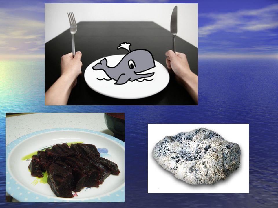 """Důvody """"sebevražd velryb 1.seizmické testy na vyhledávání ropy - 1."""