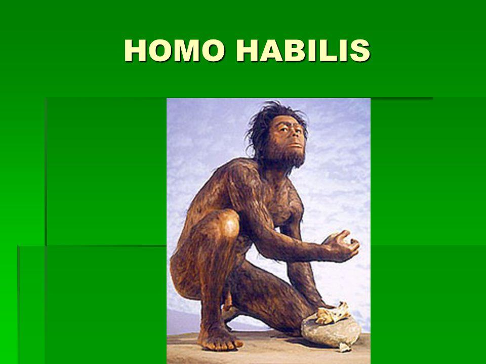 Nejbližší předchůdci člověka  HOMO ERECTUS (člověk vzpřímený)  2 mil.