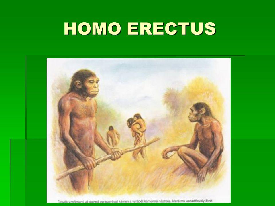 Nejbližší předchůdci člověka  HOMO SAPIENS (člověk rozumný)  400 tis.let př.n.l.