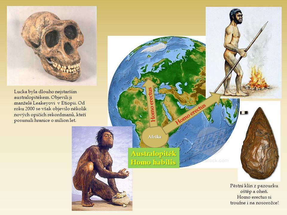 Afrika Homo erectus Lucka byla dlouho nejstarším australopitékem. Objevili ji manželé Leakeyovi v Etiopii. Od roku 2000 se však objevilo několik novýc