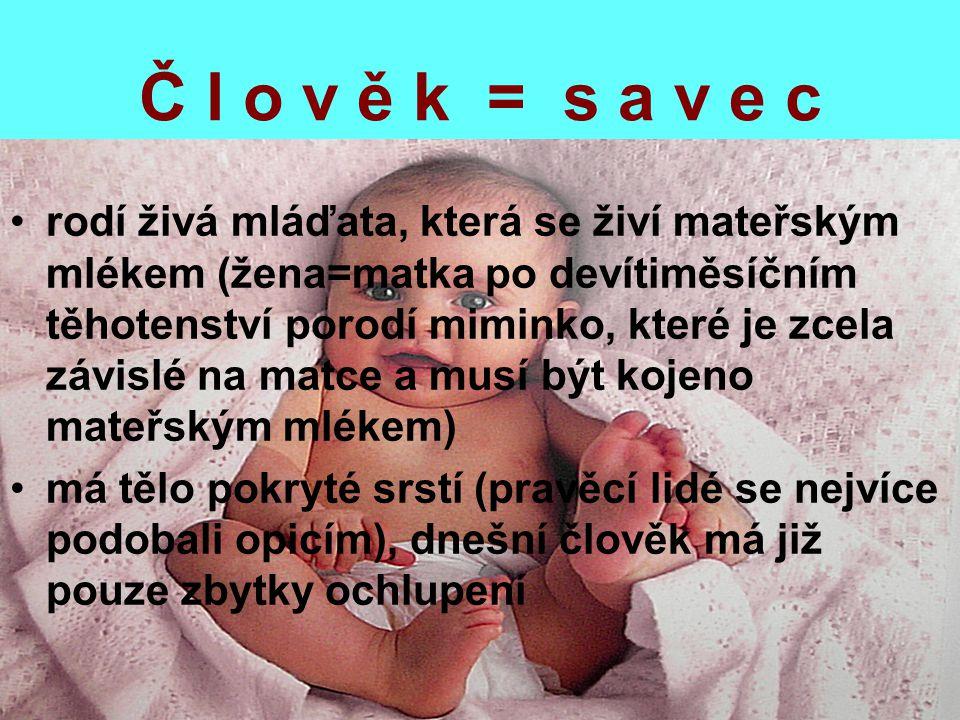 Č l o v ě k = s a v e c rodí živá mláďata, která se živí mateřským mlékem (žena=matka po devítiměsíčním těhotenství porodí miminko, které je zcela záv