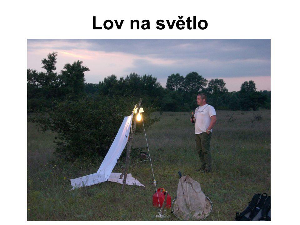 Lov na světlo
