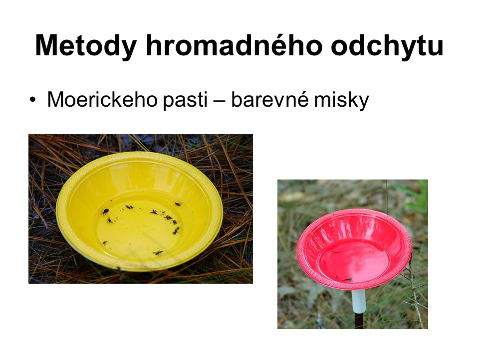 Metody hromadného odchytu Moerickeho pasti – barevné misky