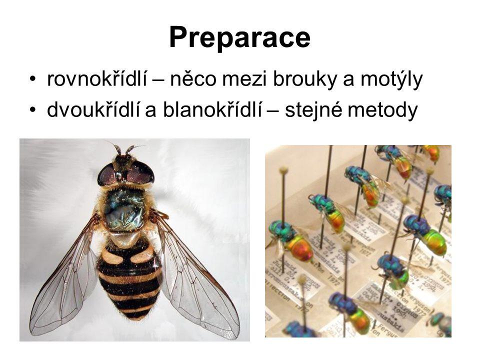 Preparace rovnokřídlí – něco mezi brouky a motýly dvoukřídlí a blanokřídlí – stejné metody