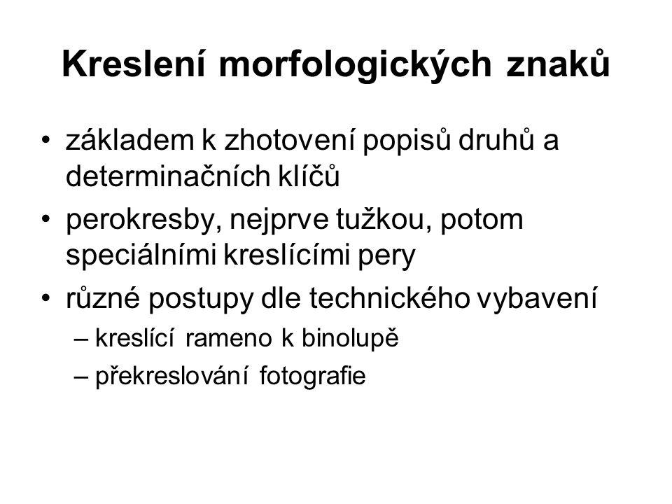 Kreslení morfologických znaků základem k zhotovení popisů druhů a determinačních klíčů perokresby, nejprve tužkou, potom speciálními kreslícími pery r