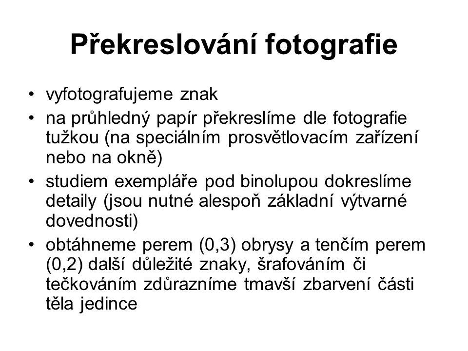 Překreslování fotografie vyfotografujeme znak na průhledný papír překreslíme dle fotografie tužkou (na speciálním prosvětlovacím zařízení nebo na okně) studiem exempláře pod binolupou dokreslíme detaily (jsou nutné alespoň základní výtvarné dovednosti) obtáhneme perem (0,3) obrysy a tenčím perem (0,2) další důležité znaky, šrafováním či tečkováním zdůrazníme tmavší zbarvení části těla jedince