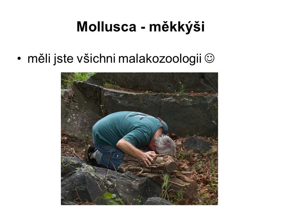 Mollusca - měkkýši měli jste všichni malakozoologii