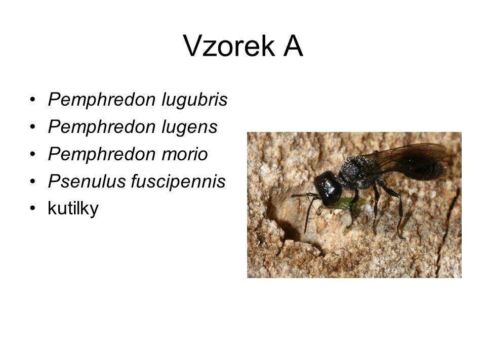 Vzorek A Pemphredon lugubris Pemphredon lugens Pemphredon morio Psenulus fuscipennis kutilky