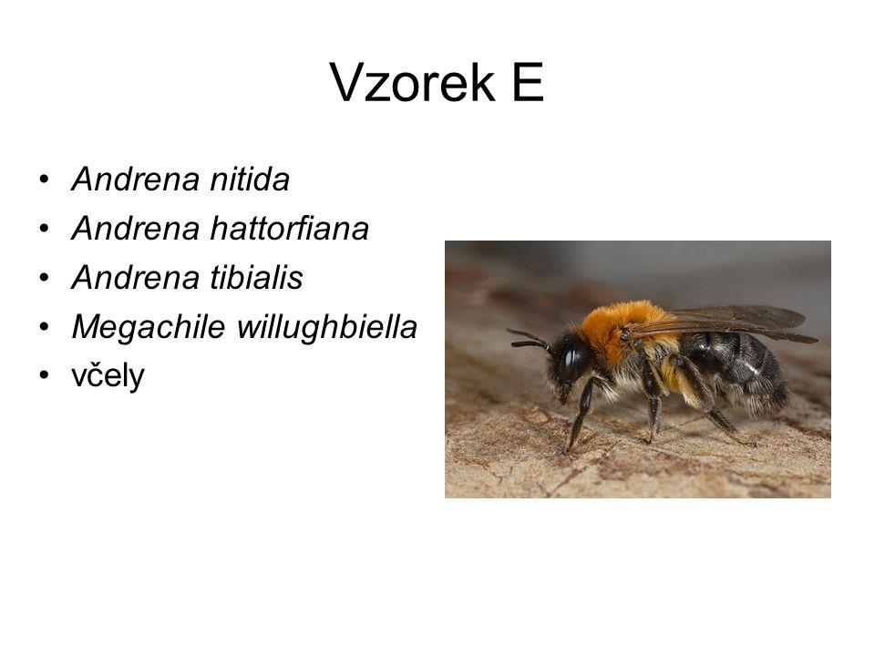 Vzorek E Andrena nitida Andrena hattorfiana Andrena tibialis Megachile willughbiella včely