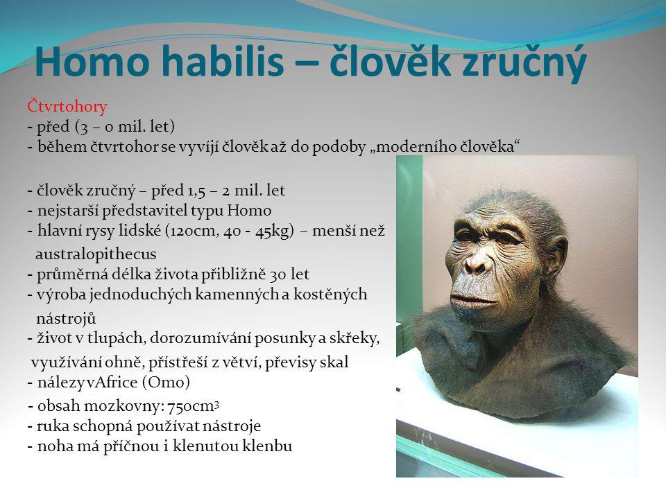 Homo habilis – člověk zručný Čtvrtohory - před (3 – 0 mil.