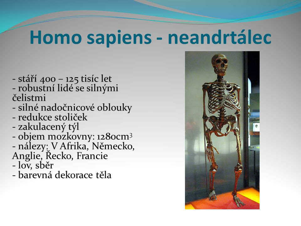Homo sapiens - neandrtálec - stáří 400 – 125 tisíc let - robustní lidé se silnými čelistmi - silné nadočnicové oblouky - redukce stoliček - zakulacený týl - objem mozkovny: 1280cm 3 - nálezy: V Afrika, Německo, Anglie, Řecko, Francie - lov, sběr - barevná dekorace těla