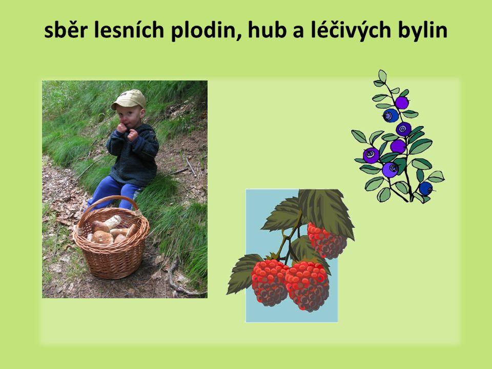 sběr lesních plodin, hub a léčivých bylin