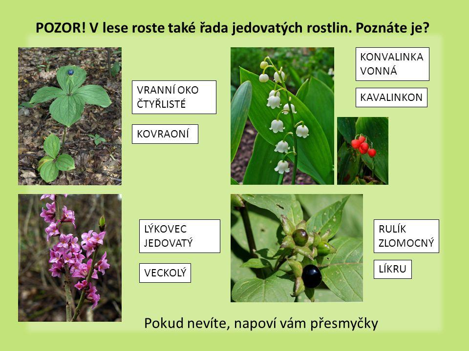 POZOR! V lese roste také řada jedovatých rostlin. Poznáte je? Pokud nevíte, napoví vám přesmyčky VRANNÍ OKO ČTYŘLISTÉ KOVRAONÍ LÝKOVEC JEDOVATÝ KONVAL