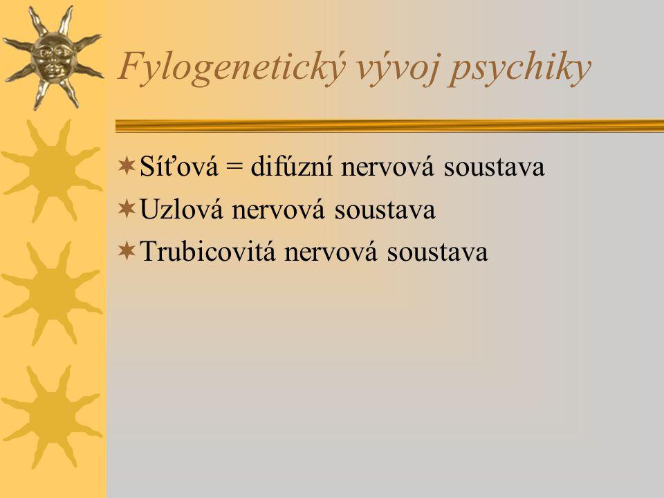Fylogenetický vývoj psychiky  Síťová = difúzní nervová soustava  Uzlová nervová soustava  Trubicovitá nervová soustava