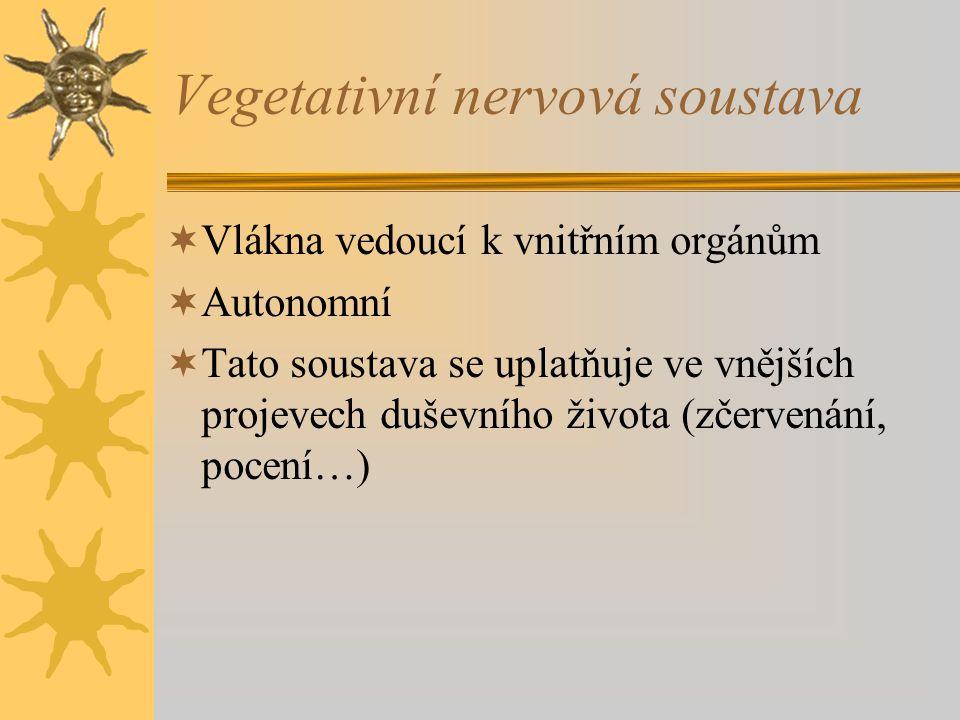 Vegetativní nervová soustava  Vlákna vedoucí k vnitřním orgánům  Autonomní  Tato soustava se uplatňuje ve vnějších projevech duševního života (zčervenání, pocení…)