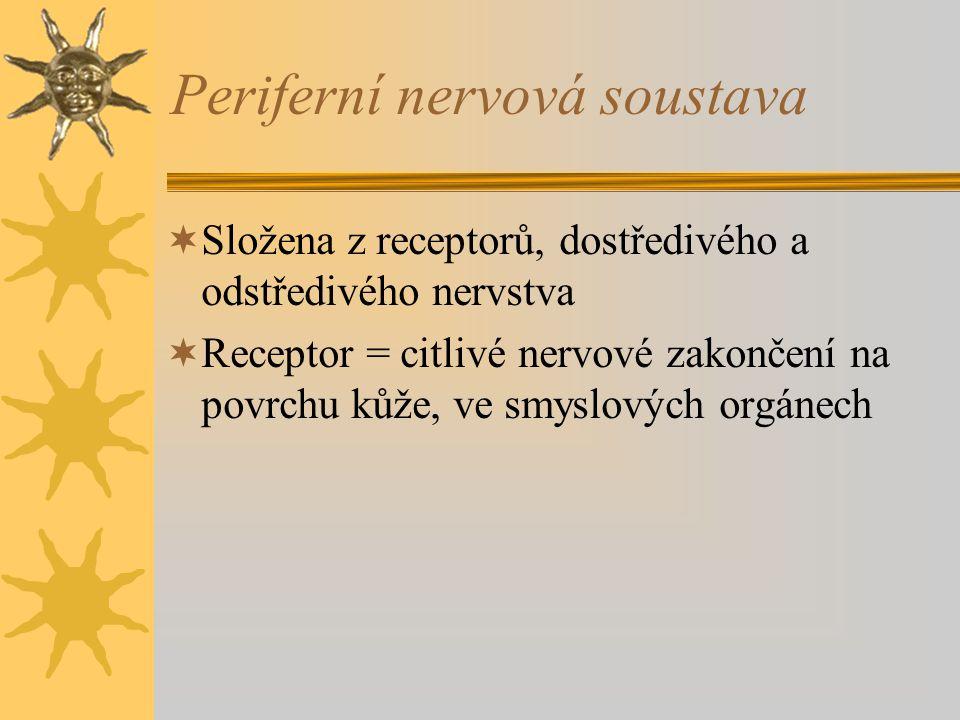 Periferní nervová soustava  Složena z receptorů, dostředivého a odstředivého nervstva  Receptor = citlivé nervové zakončení na povrchu kůže, ve smys