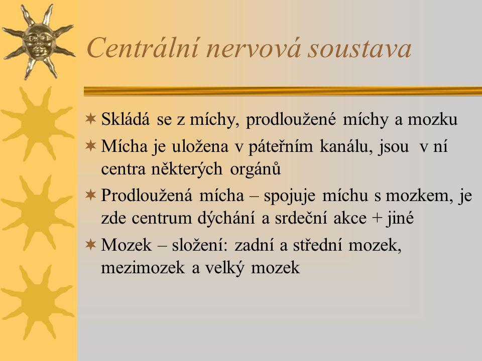Centrální nervová soustava  Skládá se z míchy, prodloužené míchy a mozku  Mícha je uložena v páteřním kanálu, jsou v ní centra některých orgánů  Prodloužená mícha – spojuje míchu s mozkem, je zde centrum dýchání a srdeční akce + jiné  Mozek – složení: zadní a střední mozek, mezimozek a velký mozek
