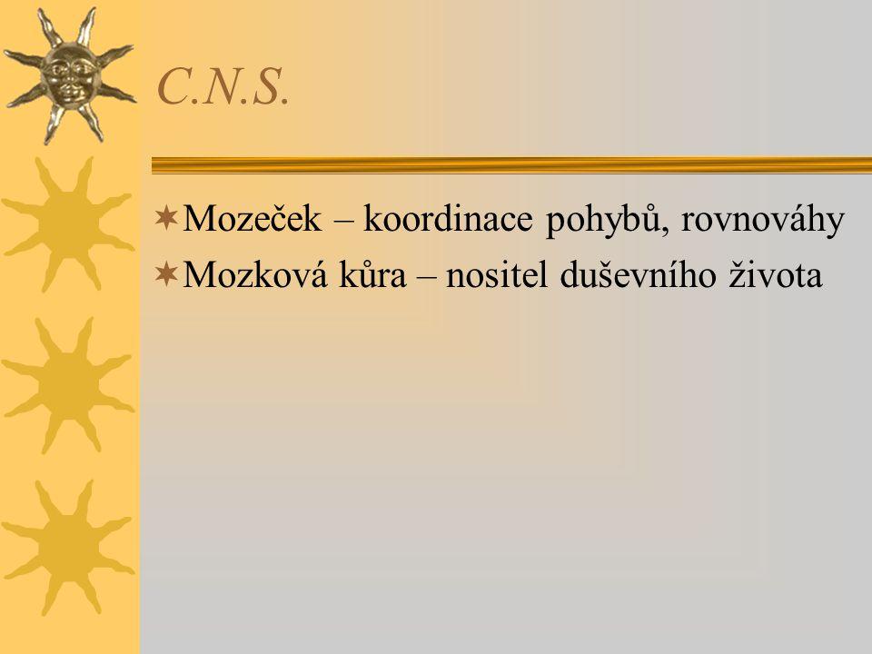 C.N.S.  Mozeček – koordinace pohybů, rovnováhy  Mozková kůra – nositel duševního života