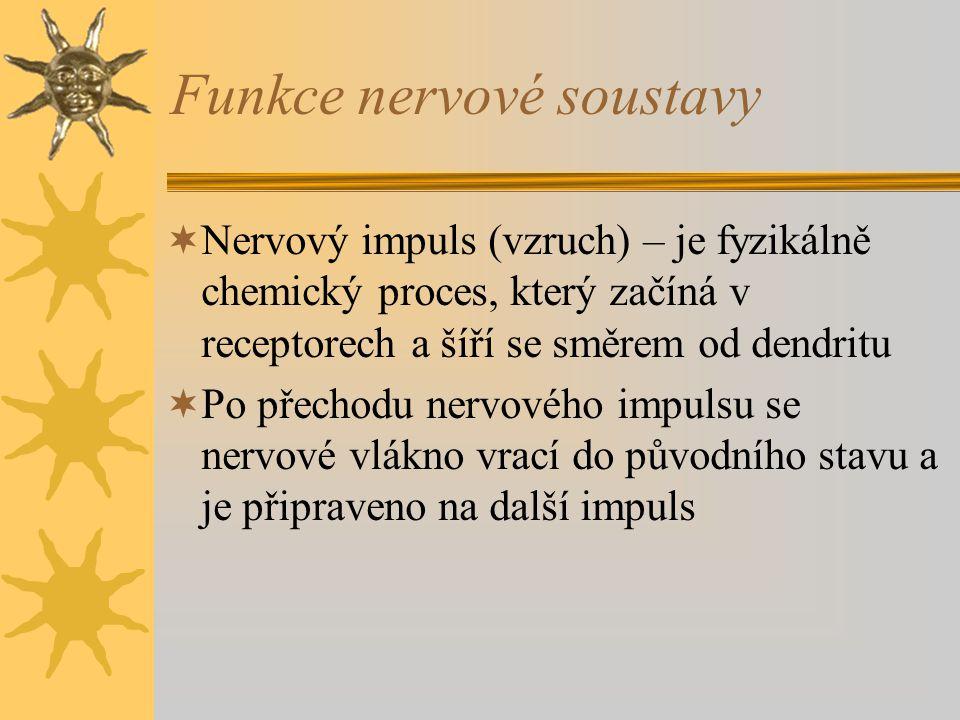 Funkce nervové soustavy  Nervový impuls (vzruch) – je fyzikálně chemický proces, který začíná v receptorech a šíří se směrem od dendritu  Po přechodu nervového impulsu se nervové vlákno vrací do původního stavu a je připraveno na další impuls