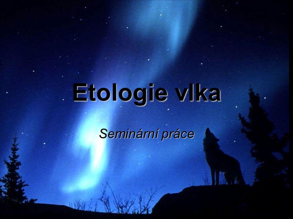 Etologie vlka Seminární práce